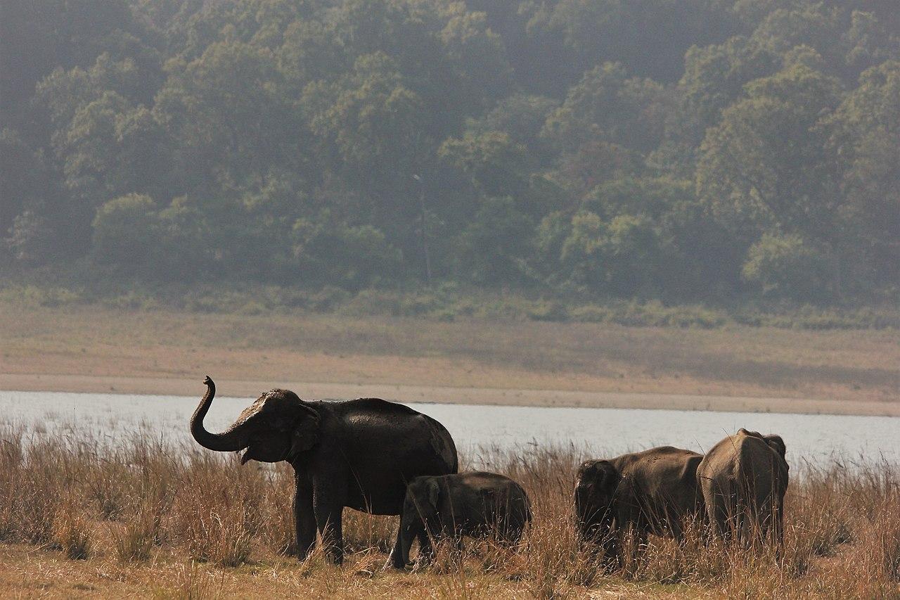 Dhikala - Jim Corbett national park