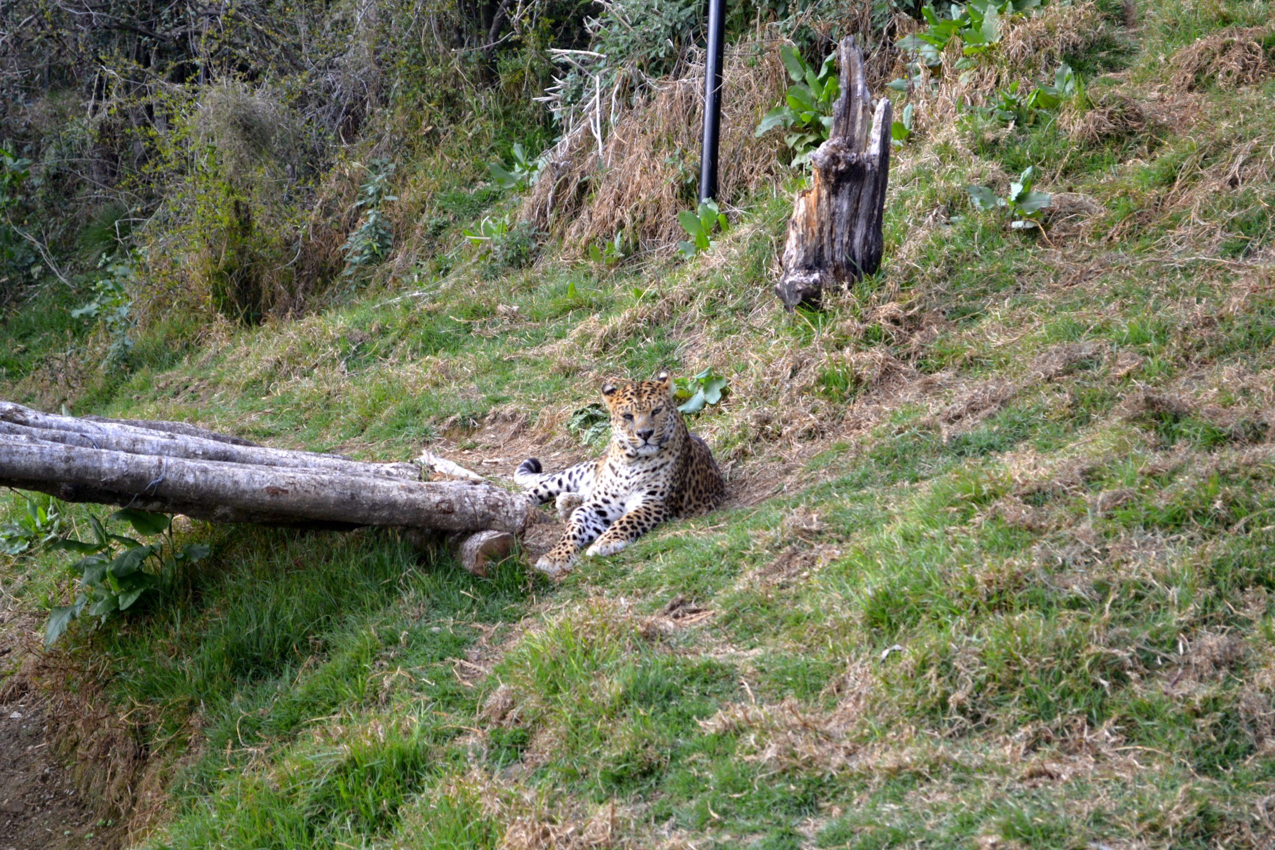 Jim Corbett National Park Most Popular Place To Visit In Uttarakhand
