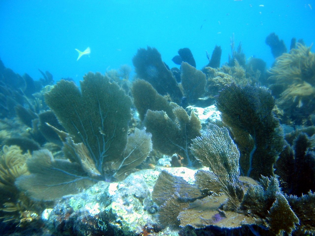 Top Destination in the Florida Keys-John Pennekamp Coral Reef State Park