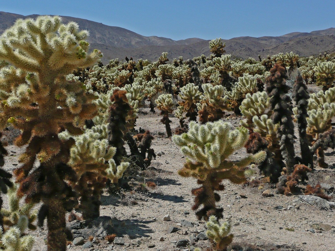 Popular Destination in California-Joshua Tree National Park