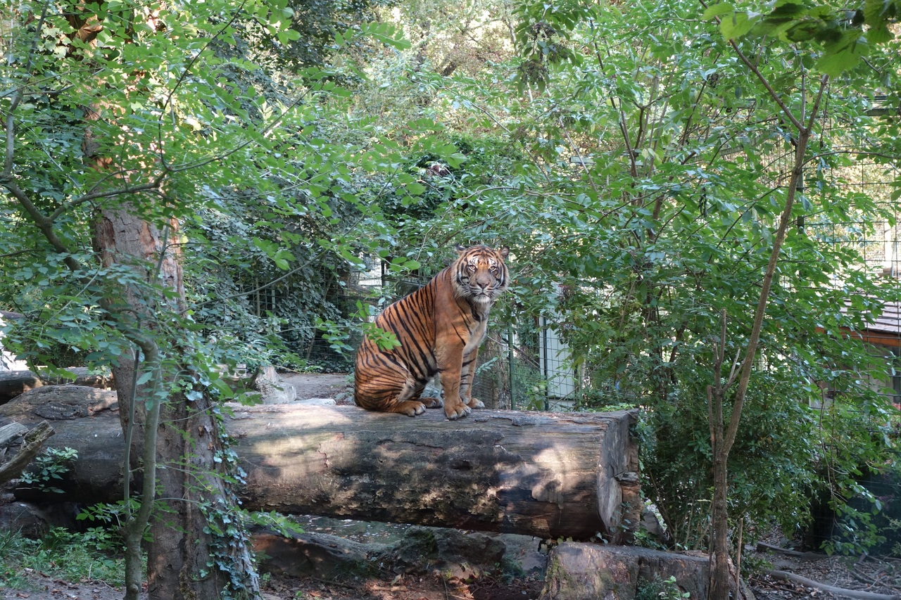 Amazing Place to Visit in Jhargram-Jungle Mahal Zoological Park