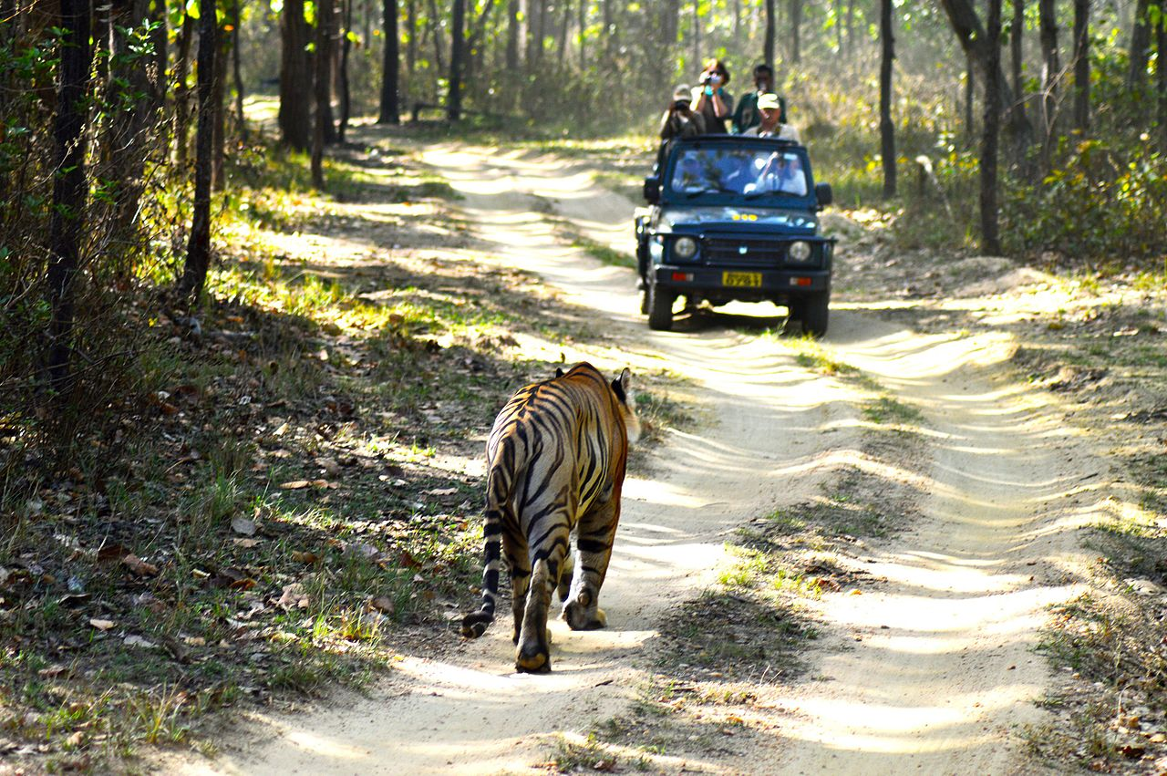 Top Weekend Destination from Gondia, Maharashtra-Kanha National Park