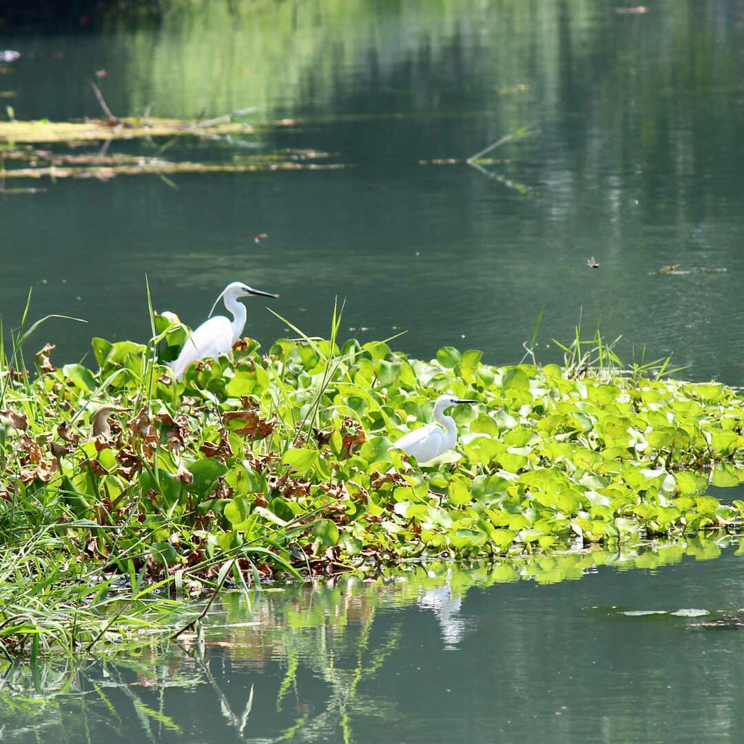 Amazing Attraction Place in Kapurthala-Kanji Wetlands, Birds Watching and Boating
