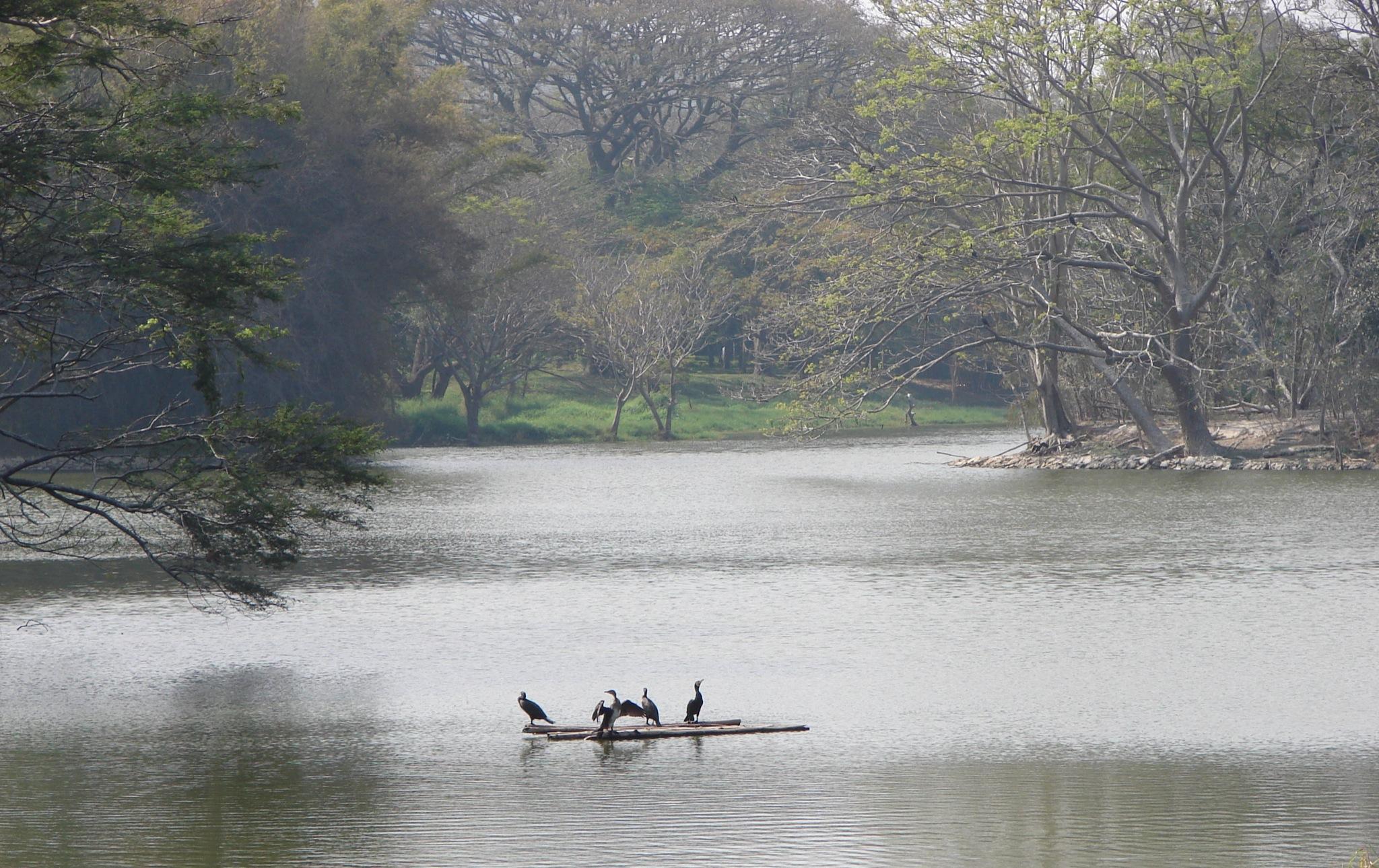 Karanji Lake Amazing Place To Visit When In Mysore
