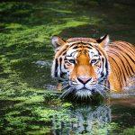 Katarniaghat Wildlife Sanctuary - The Tiger Lands of Uttar Pradesh
