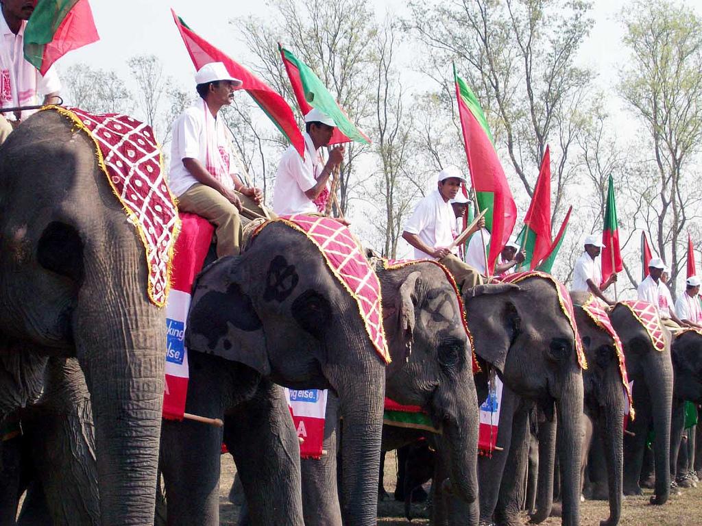 Popular Festival Celebrated In Assam-Kaziranga Elephant Festival