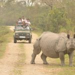 Kaziranga National Park - Top National Park In Assam