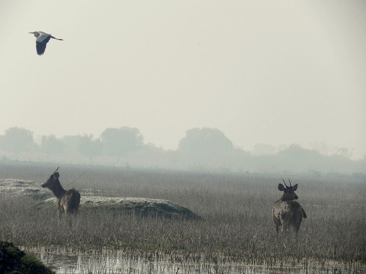 Top National Park In Rajasthan-Keoladeo National Park