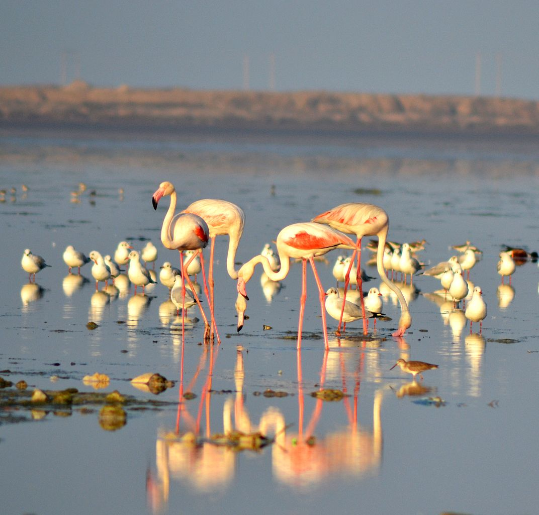 Top Place Of Tourist Interest in Jamnagar-Khijadiya Bird Sanctuary