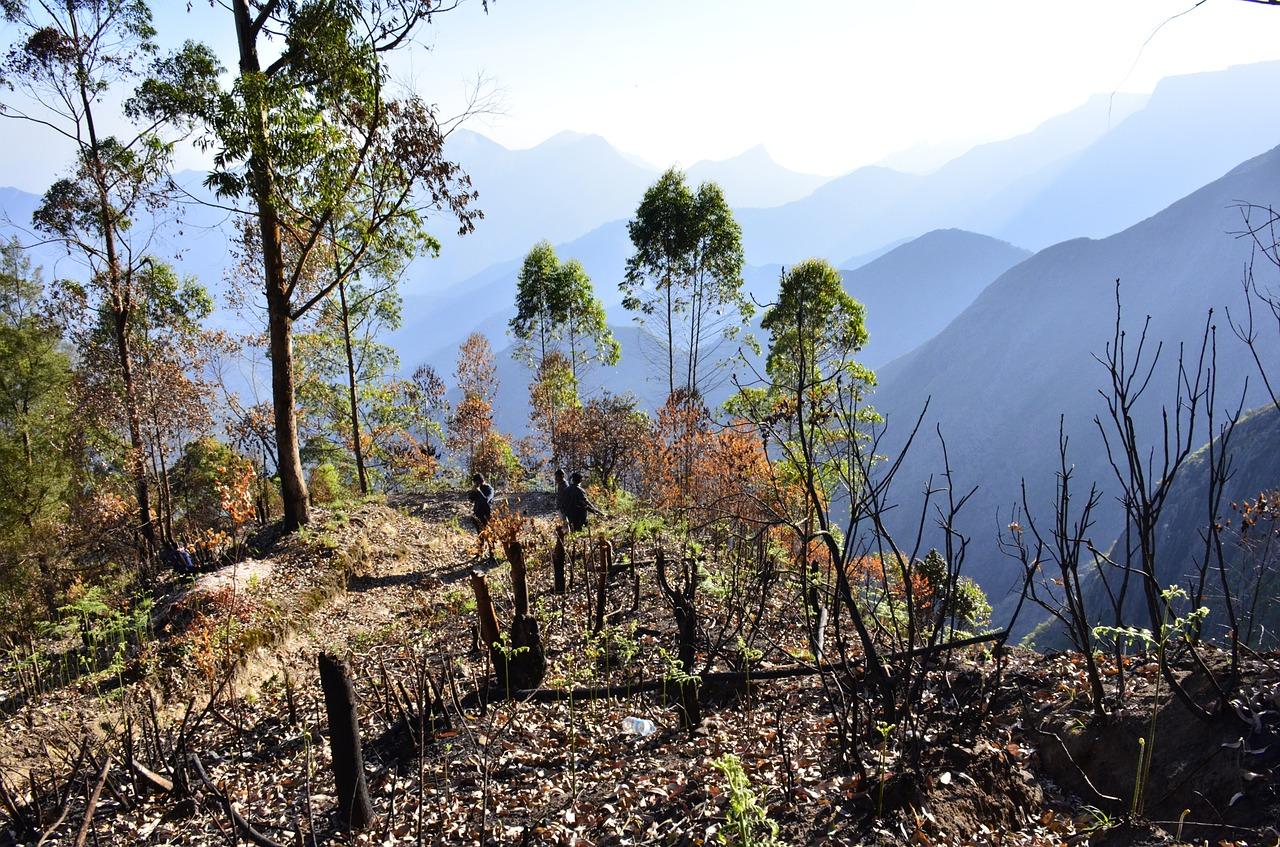Sightseeing Place to Visit In Kodaikanal-Kodai-Palani Trek