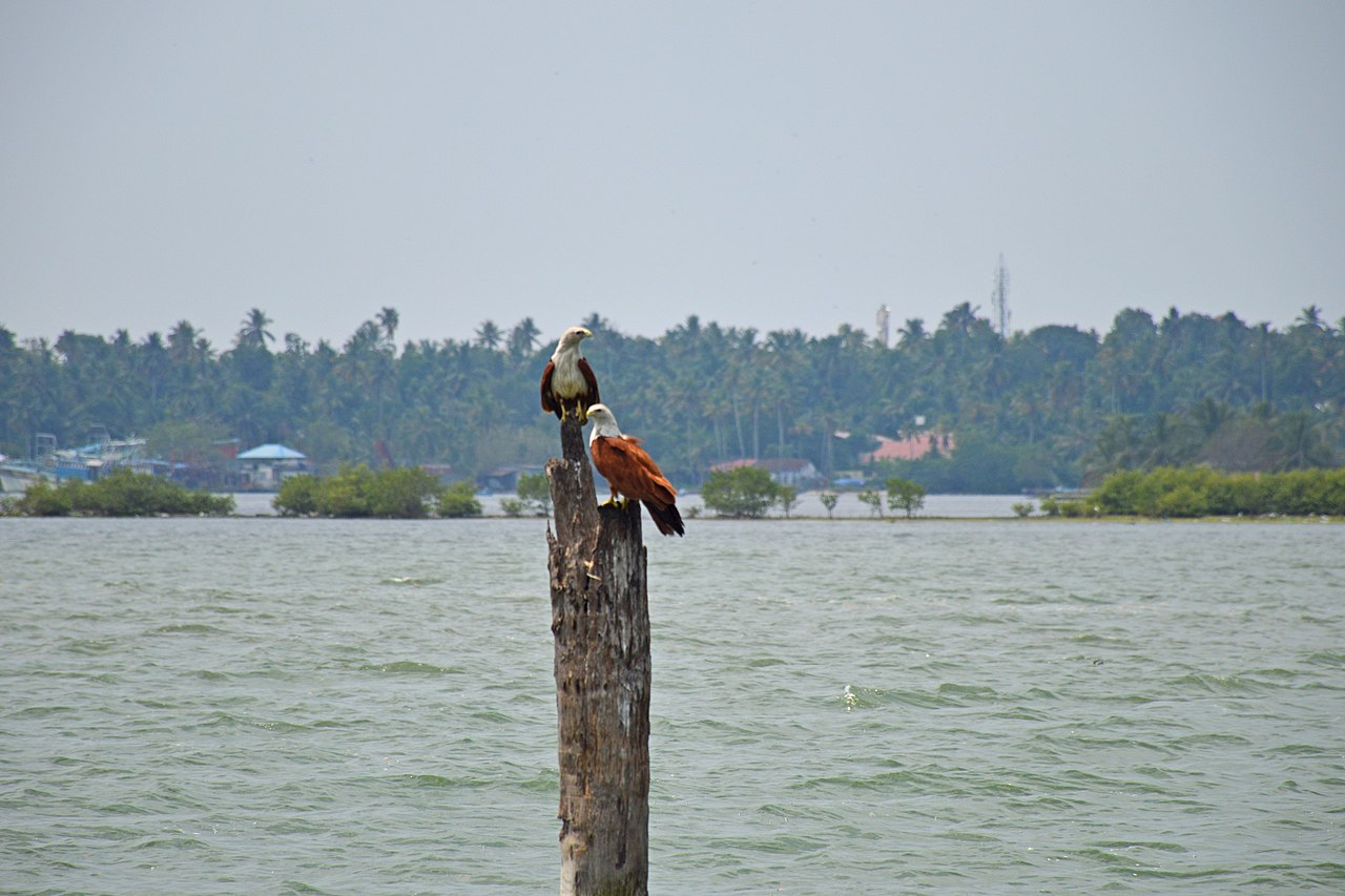 Best Attraction in Kumarakom-Kumarakom Bird Sanctuary