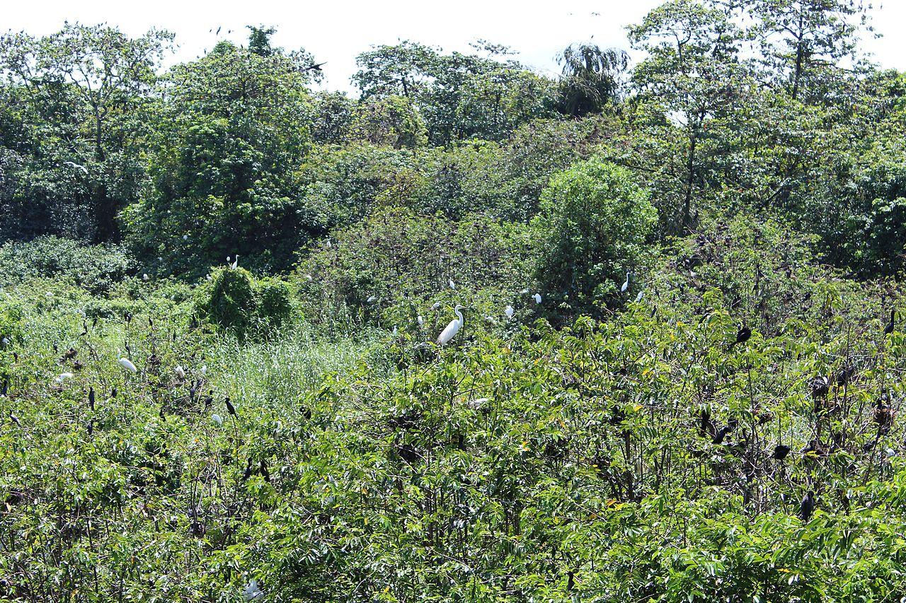 Amazing Attraction in Kottayam-Kumarakom Bird Sanctuary