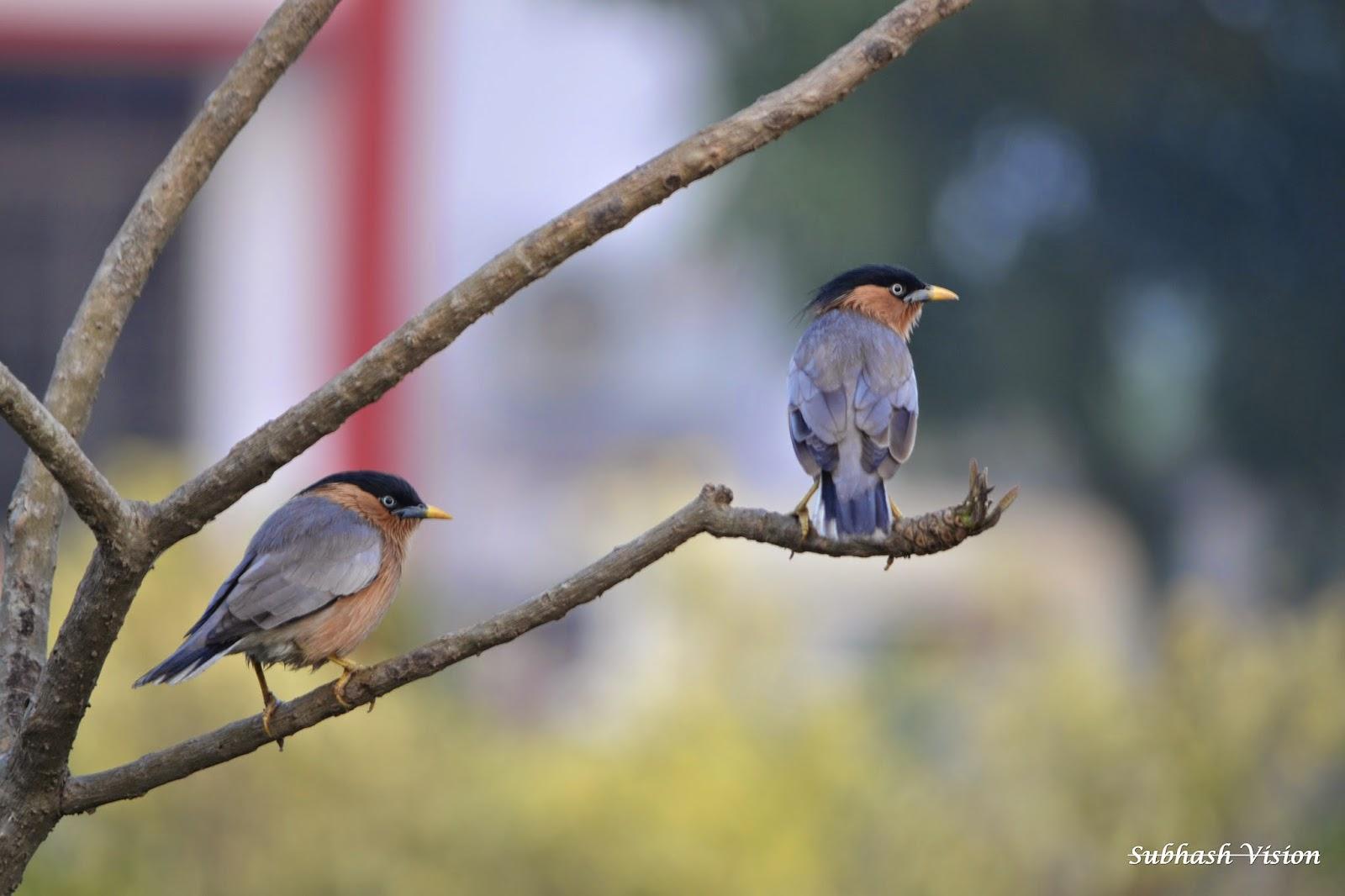 Must-Visit Attraction of Darbhanga-Kusheshwar Asthan Bird Sanctuary