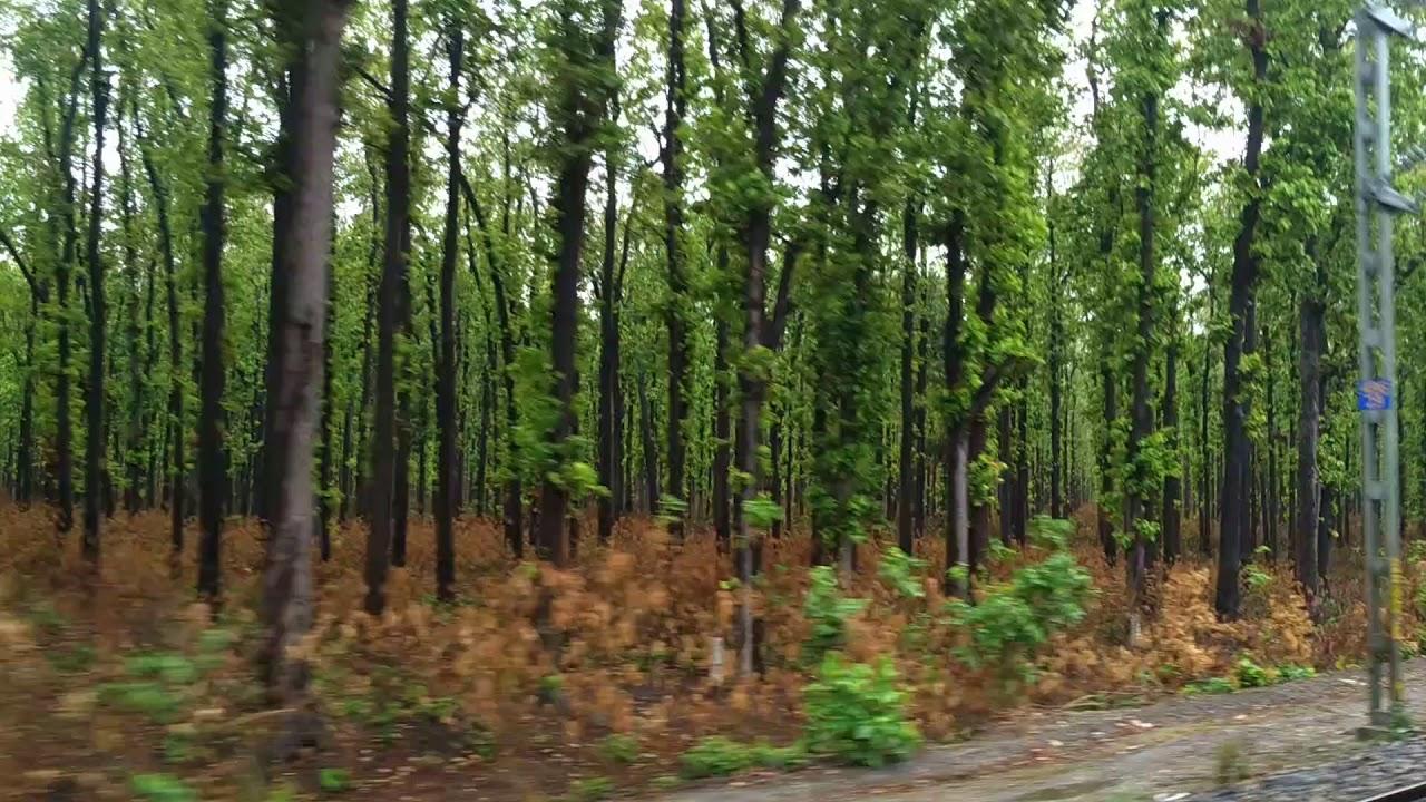 Amazing Destination in Gorakhpur-Kushmi Forest