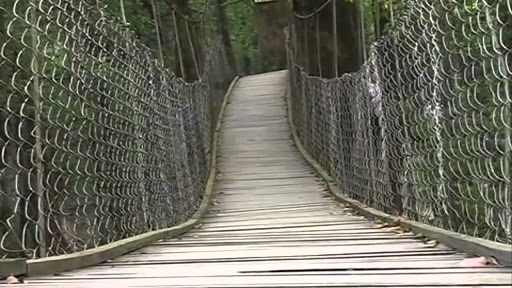 Top Weekend Destination from Alipurduar-Canopy Walk, Lolegaon