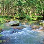 6 Enchanting Places in Netarhat For All The Wanderlust Travelers