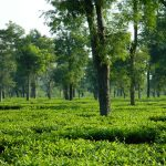 Top Things To Do In Assam For a Memorable North East India