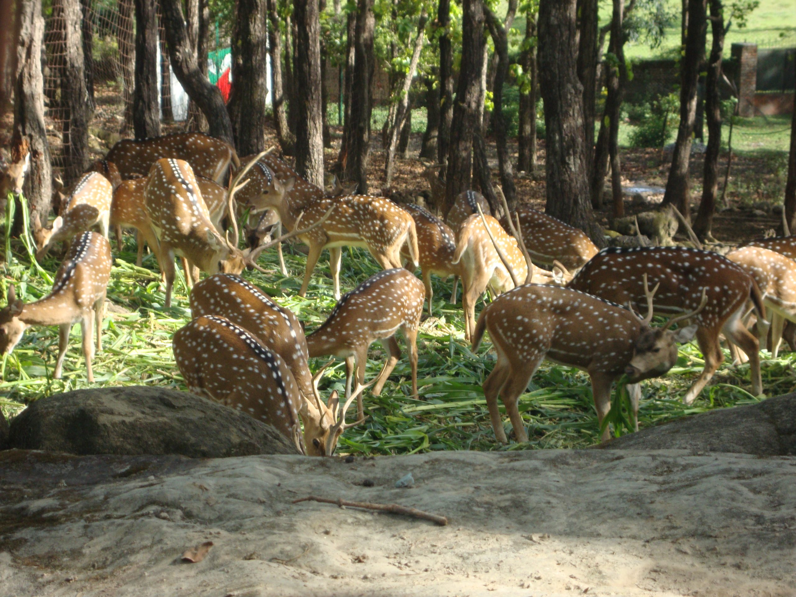 Malsi Deer Park - Amazing Places To Visit In Dehradun
