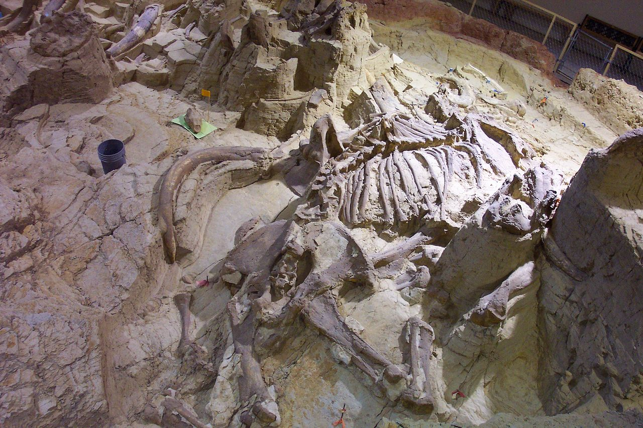 Top Place to Visit In South Dakota-Mammoth Site