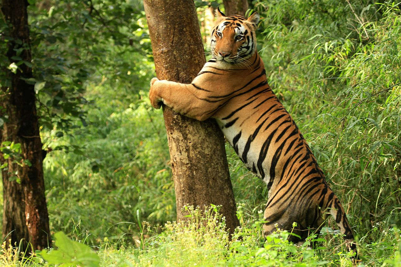 Best Weekend Trip Near Jabalpur-Mandla, Kanha National Park