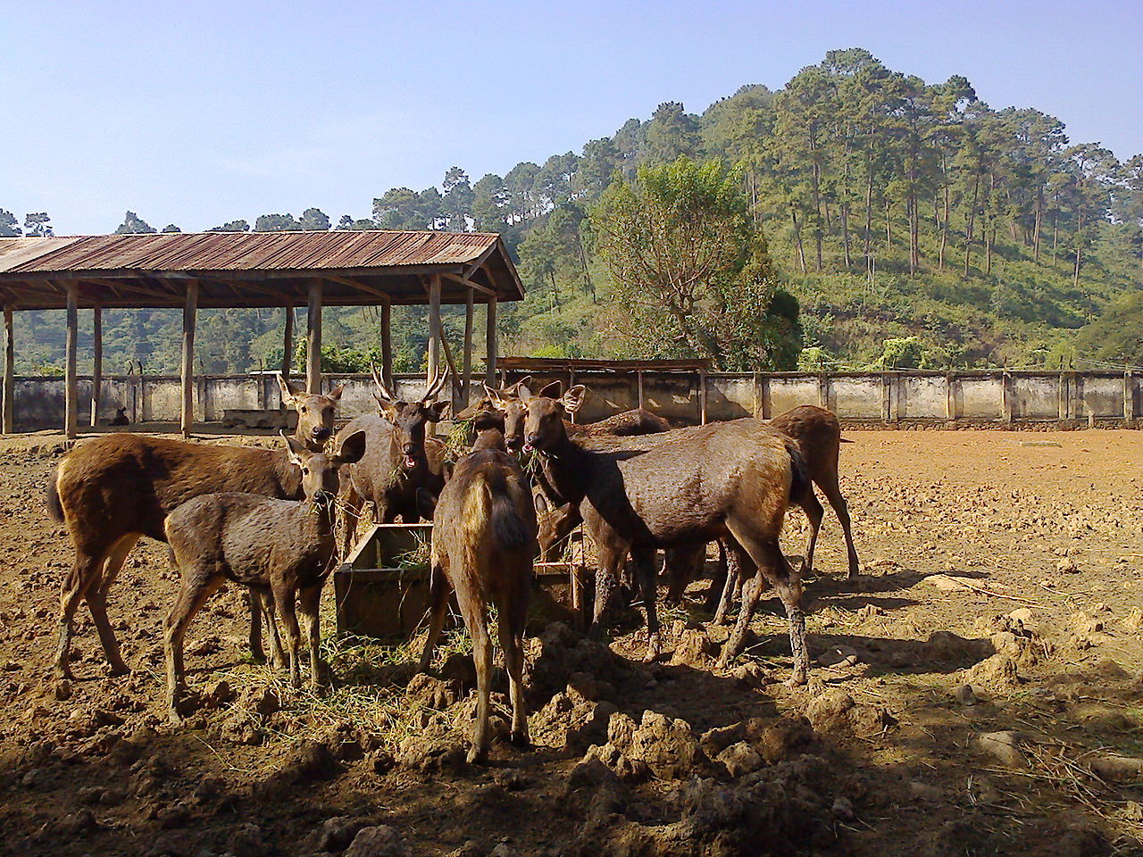Top Tourist Place In Imphal-Manipur Zoological Gardens