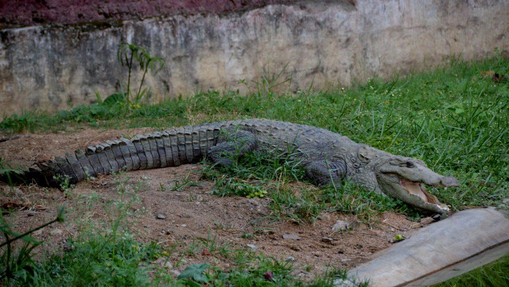 Visit The Manjeera Crocodile Sanctuary
