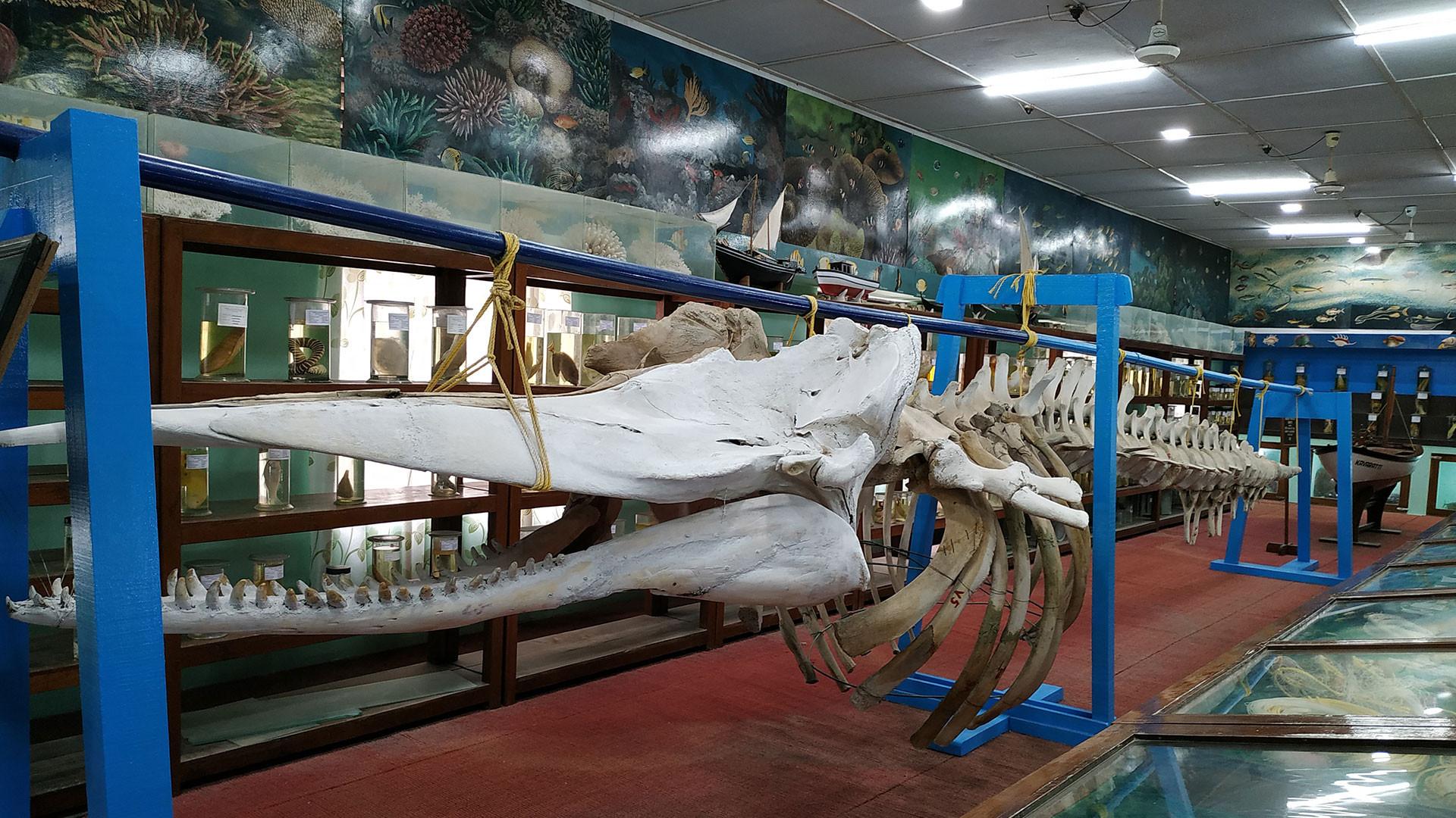 Sight-Seeing Destination in Lakshadweep Islands-Marine Museum