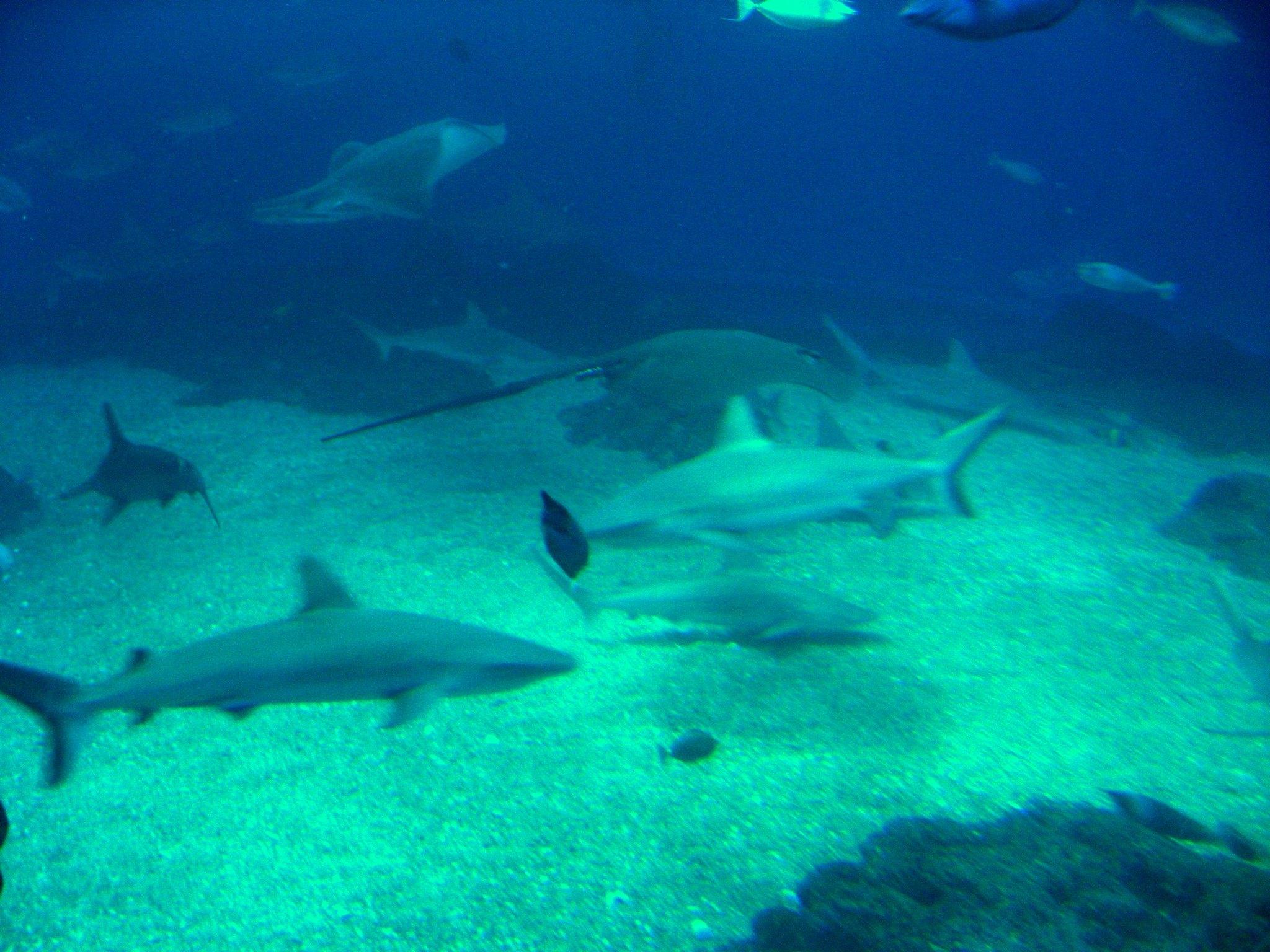 Must Visit Place Visit In Hawaii-Maui Ocean Centre