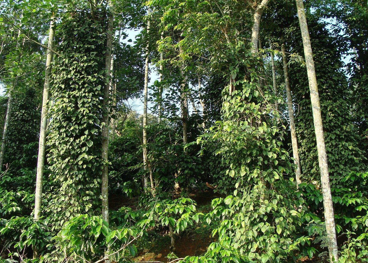 Must Visit Coffee Farm in Hawaii-Mauka Meadows