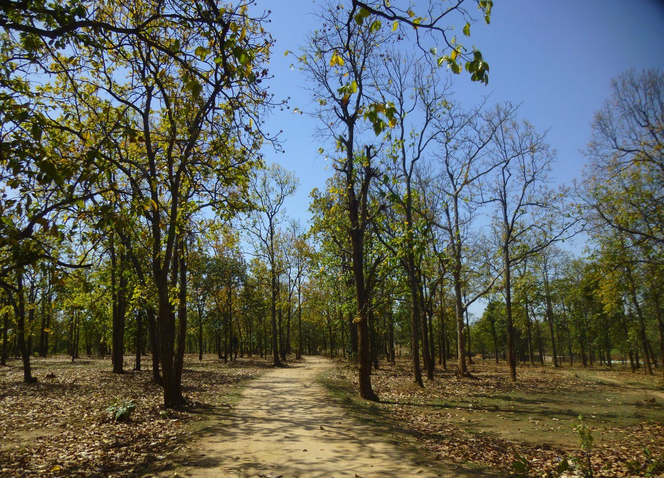 Top Spot In Mccluskieganj-McCluskieganj Forests