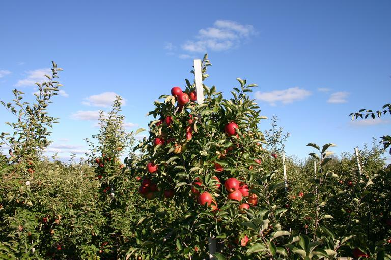 Best Location For A Perfect Weekend Getaway From San Antonio-Medina, Apple Orchardsc