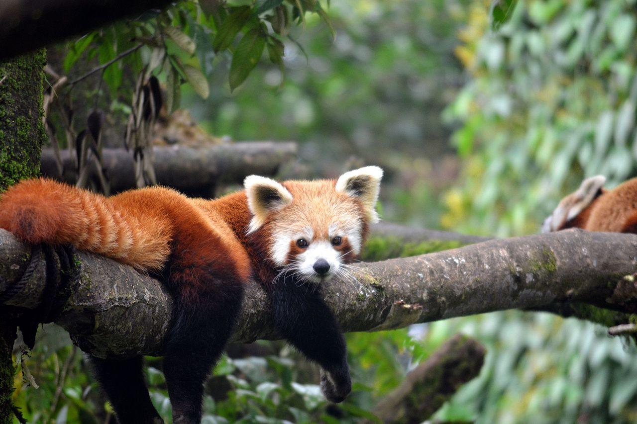 Mehao Wildlife Sanctuary In Arunachal Pradesh