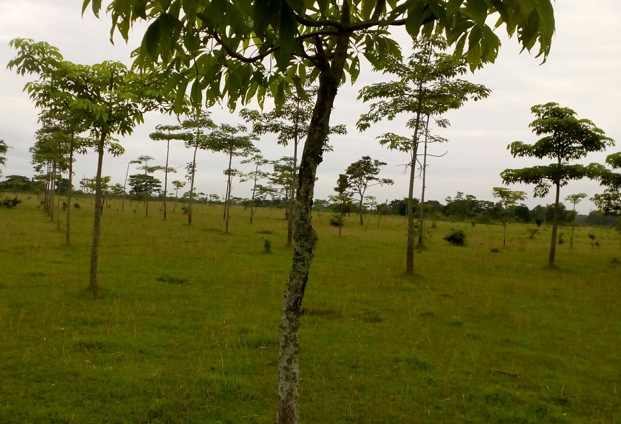 Sightseeing Destination To Visit In Jorhat-Molai Forest