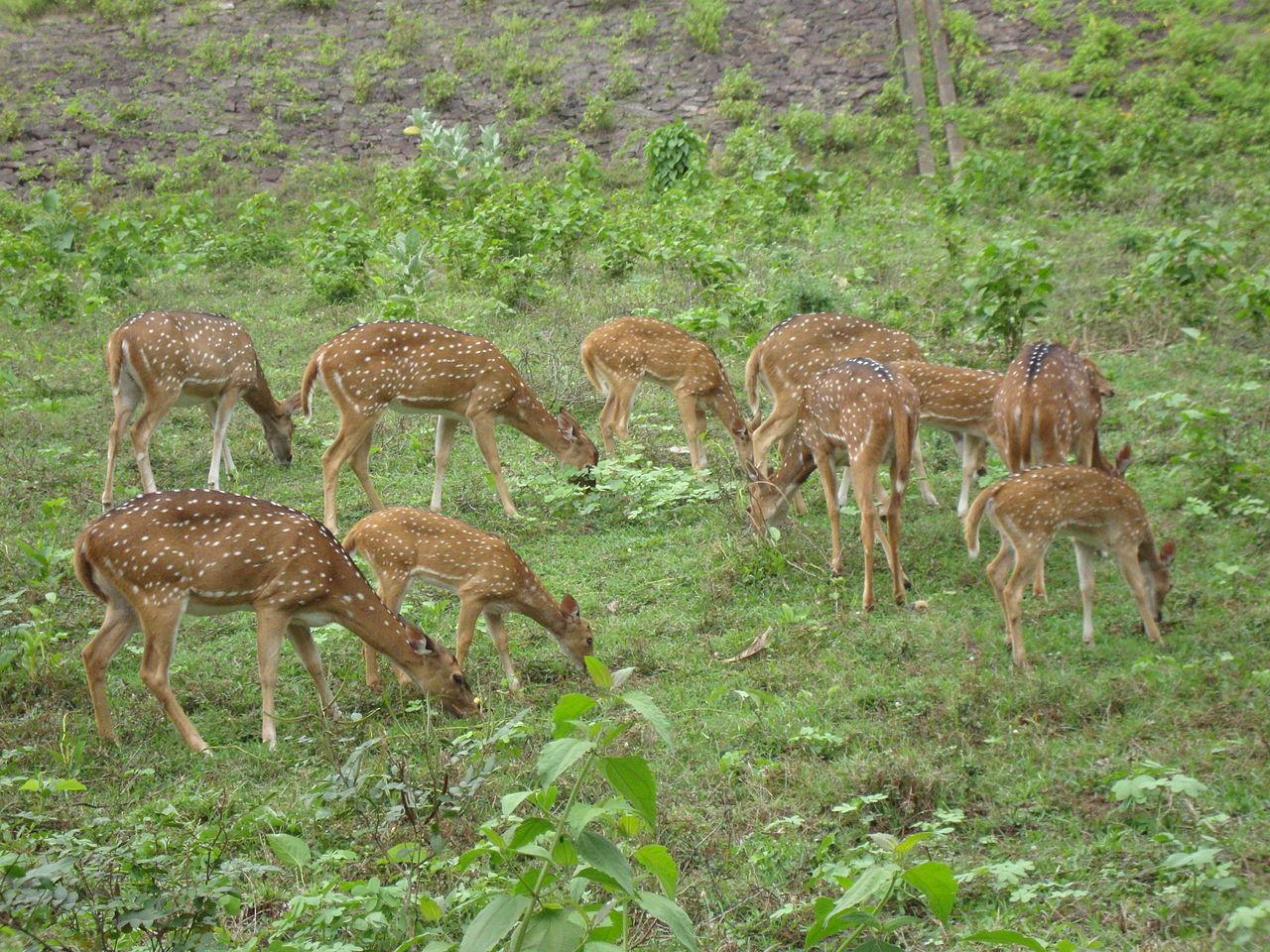 Mrugavani National Park in Telangana
