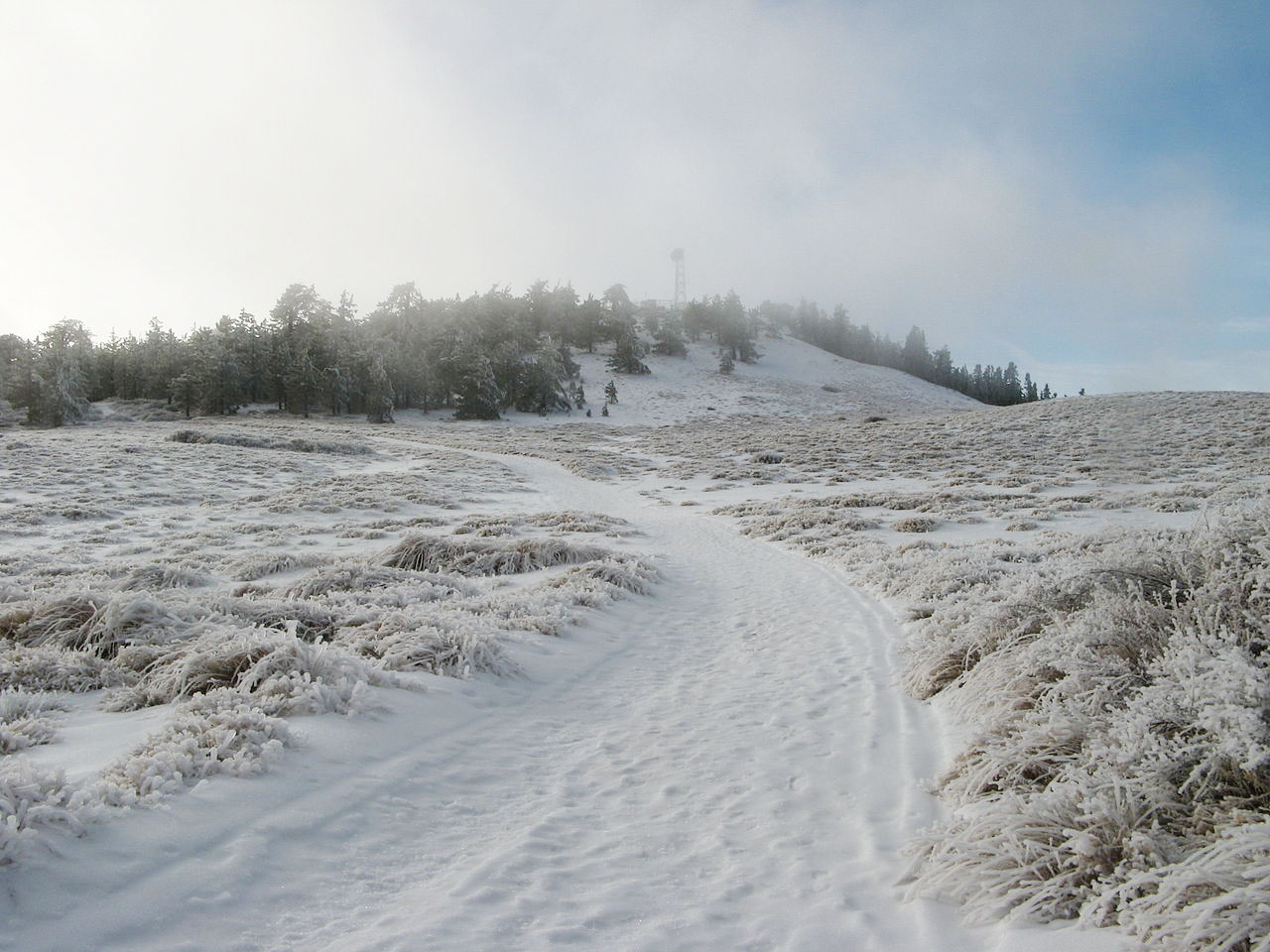 Mt. Pinos - Top-Rated Winter Destination in Los Angeles