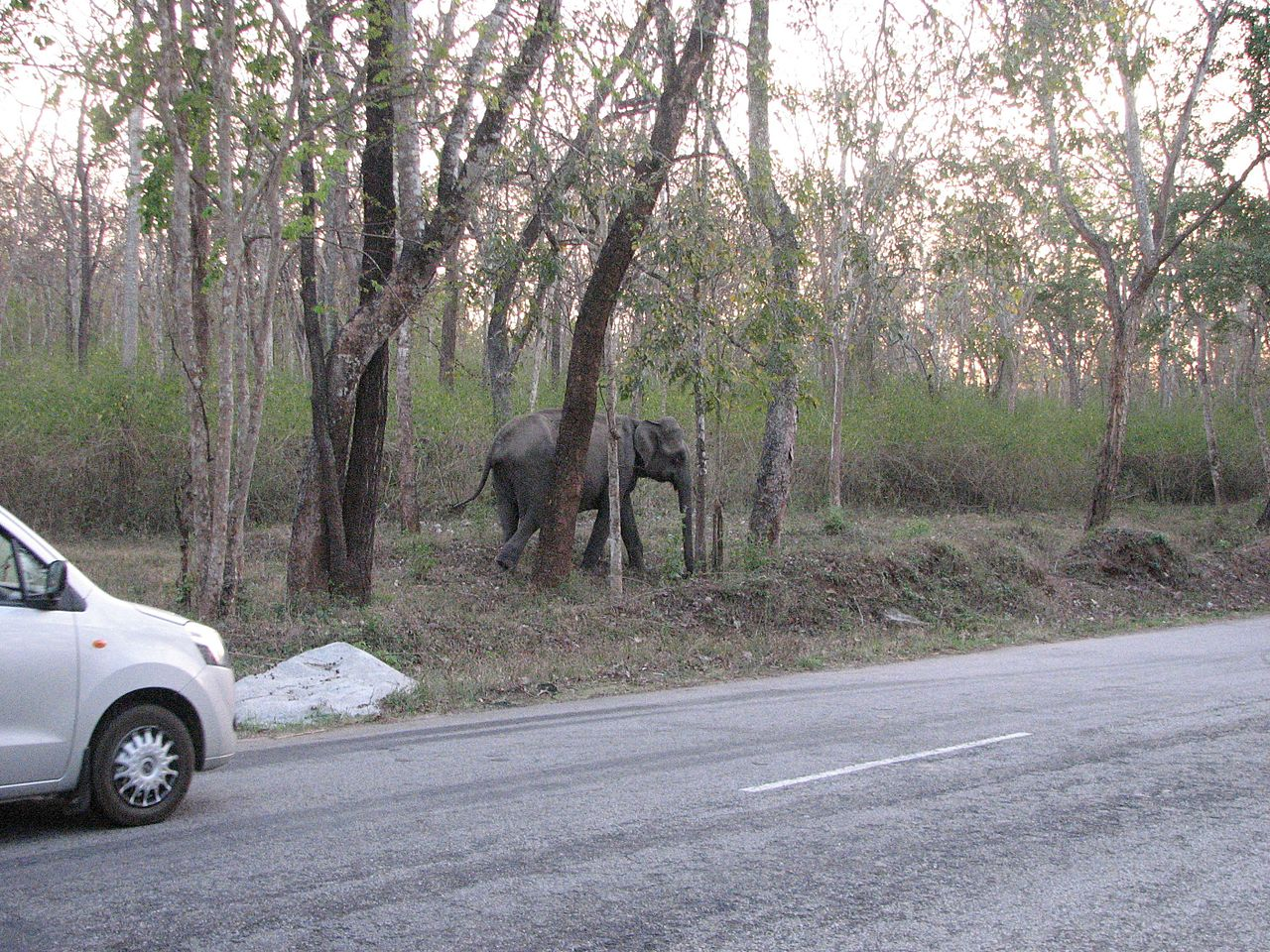 Top-Rated Weekend Destination From Erode-Mudumalai National Park and Wildlife Sanctuary