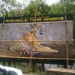 Mudumalai Sanctuary - Amazing Ecotourism Destination In Tamil Nadu