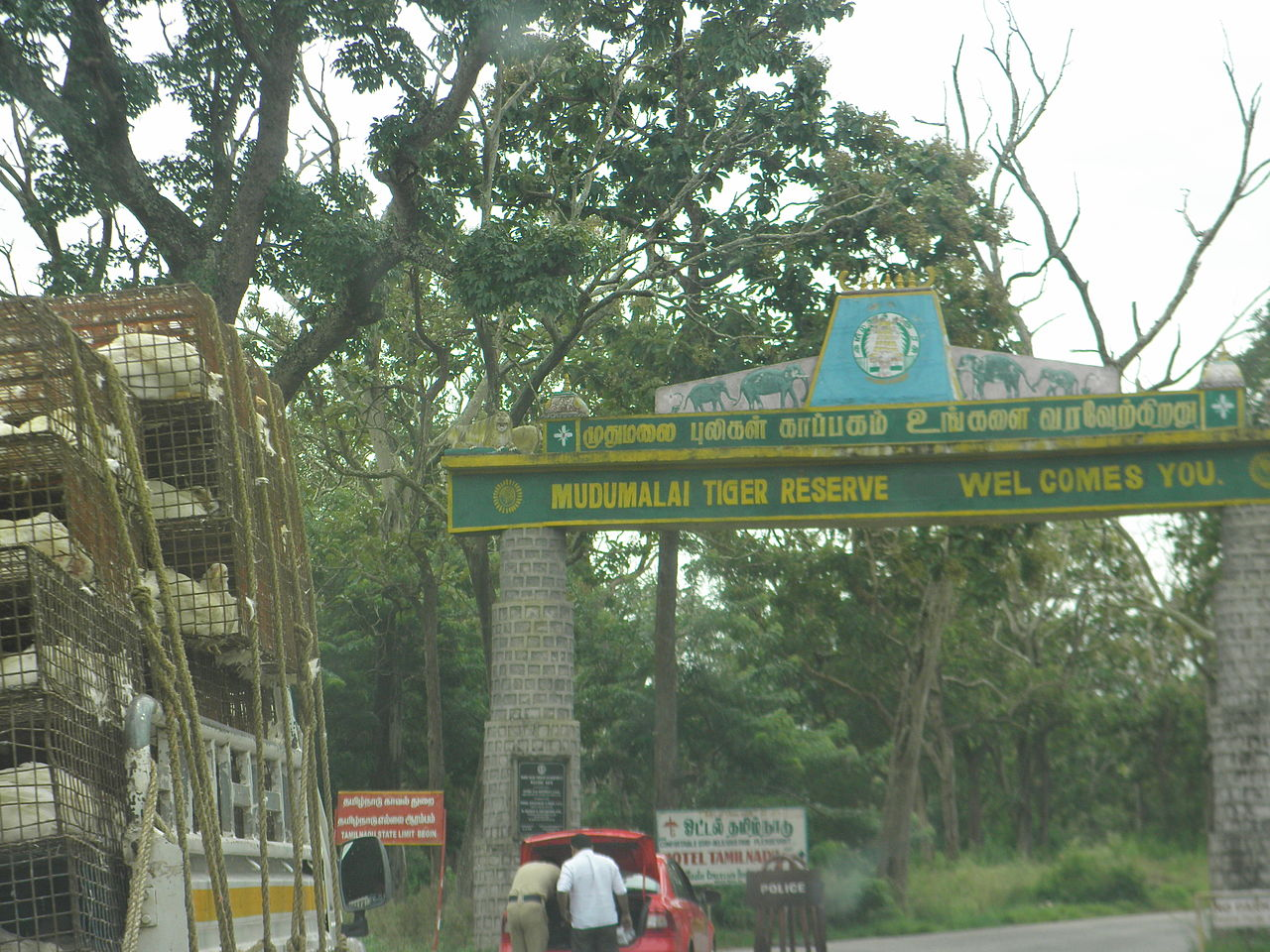 Visit Mudumalai Tiger Reserve For An Enchanting Wildlife Experience