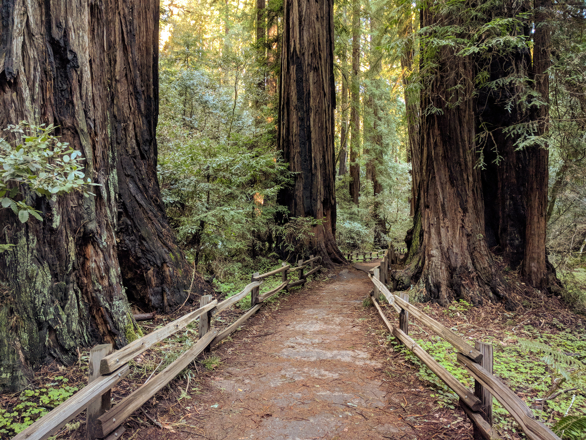 Incredible Place To Visit In California-Muir Woods National Monument