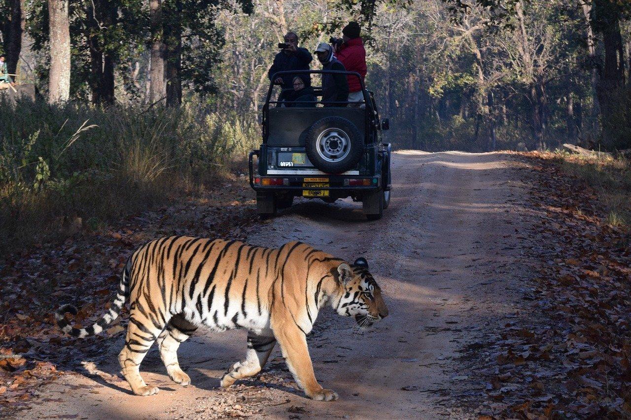 Amazing National Park In Rajasthan-Mukundhara National Park