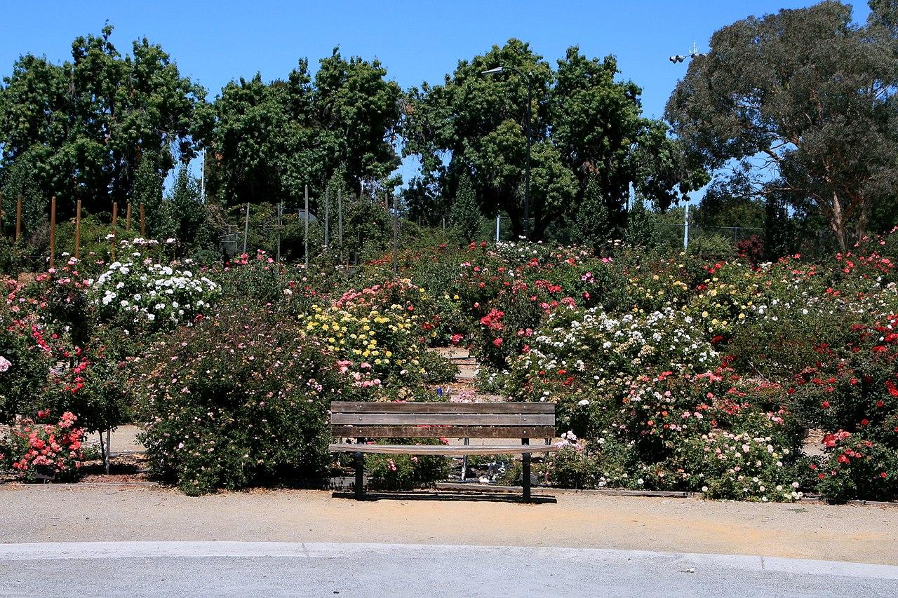 Popular Tourist Place To Visit In San Jose-Municipal Rose Garden