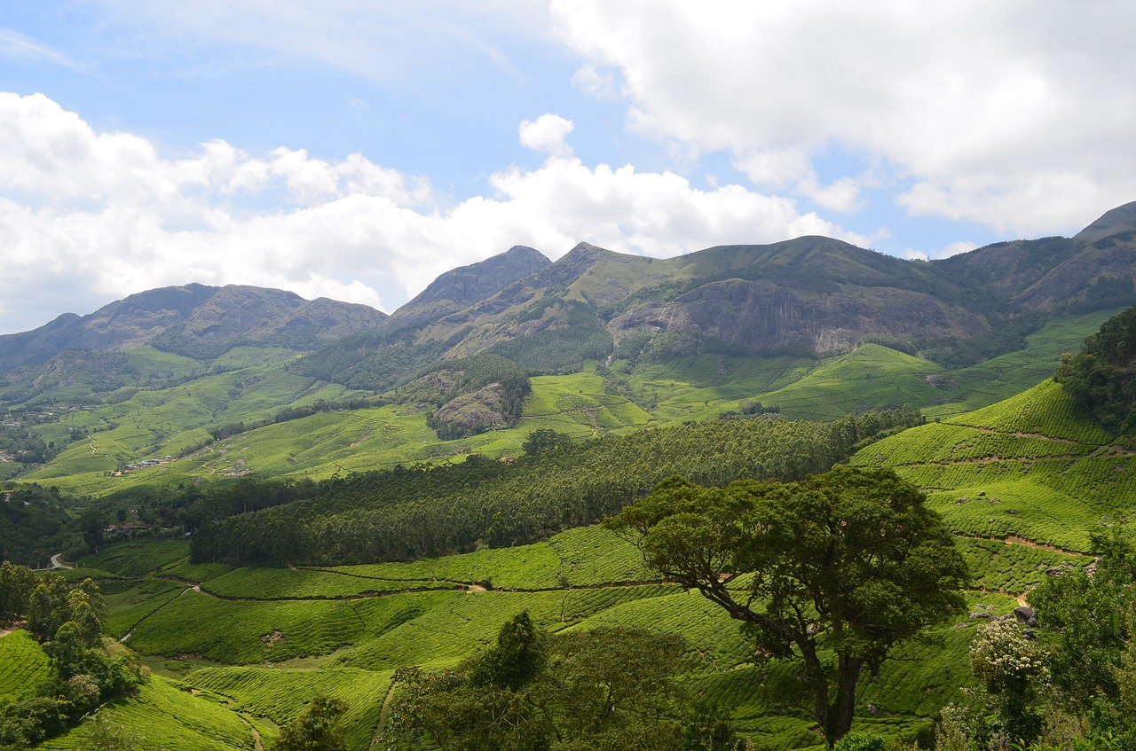 Munnar Tea Plantation - Incredible Hill Station in Kerala
