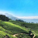 10 Awesome Destinations in Munnar