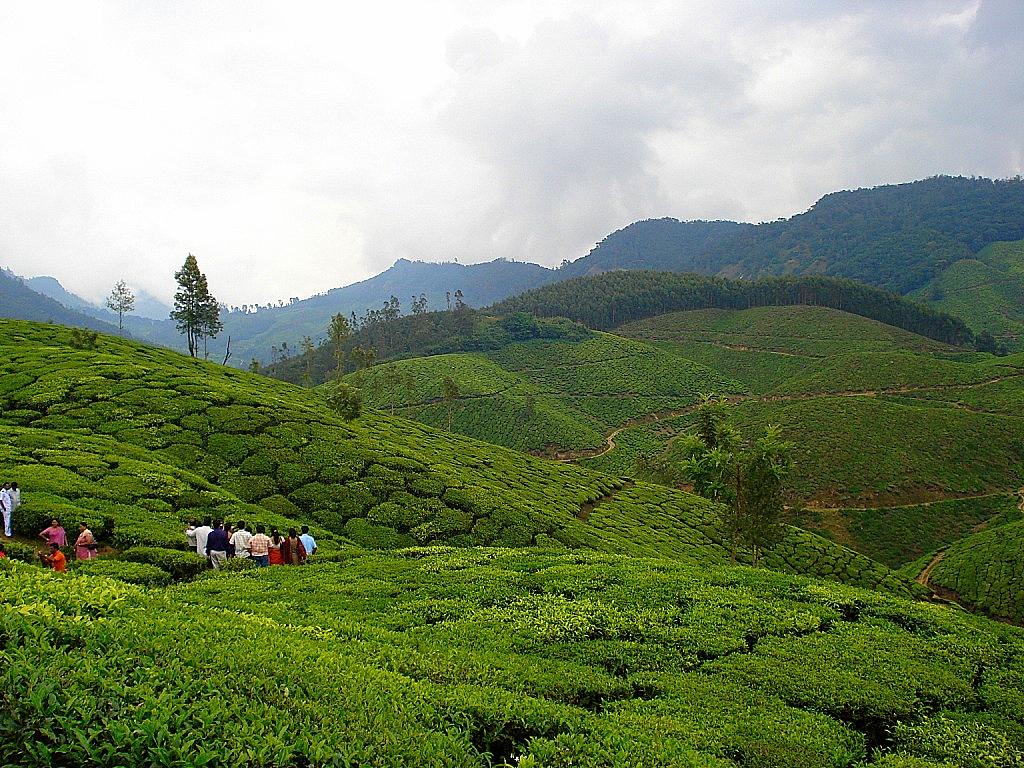 Munnar - Weekend Getaways Within 350 km of Wayanad