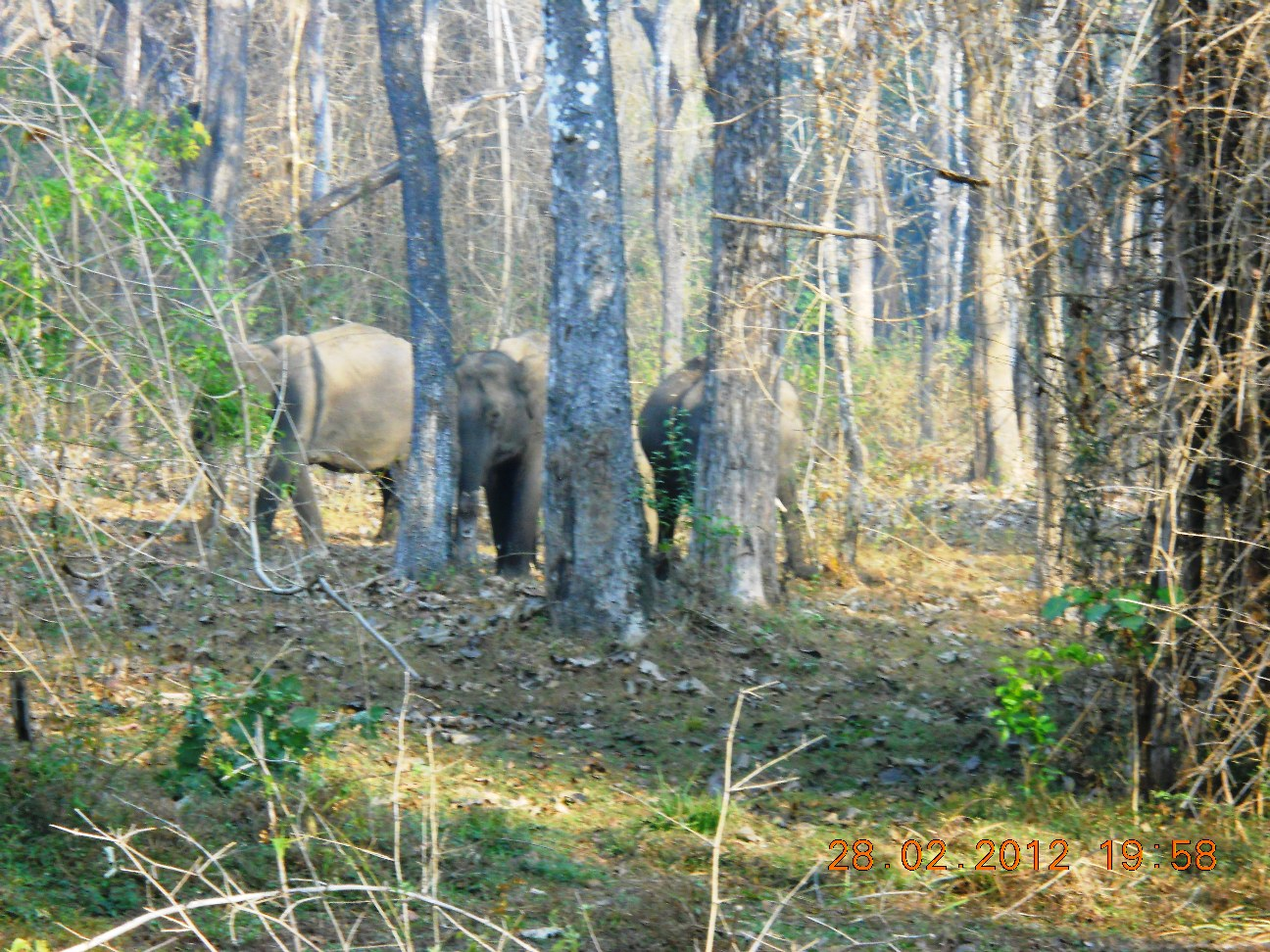 Muthanga Wildlife Sanctuary - Best Place to Visit in Wayanad