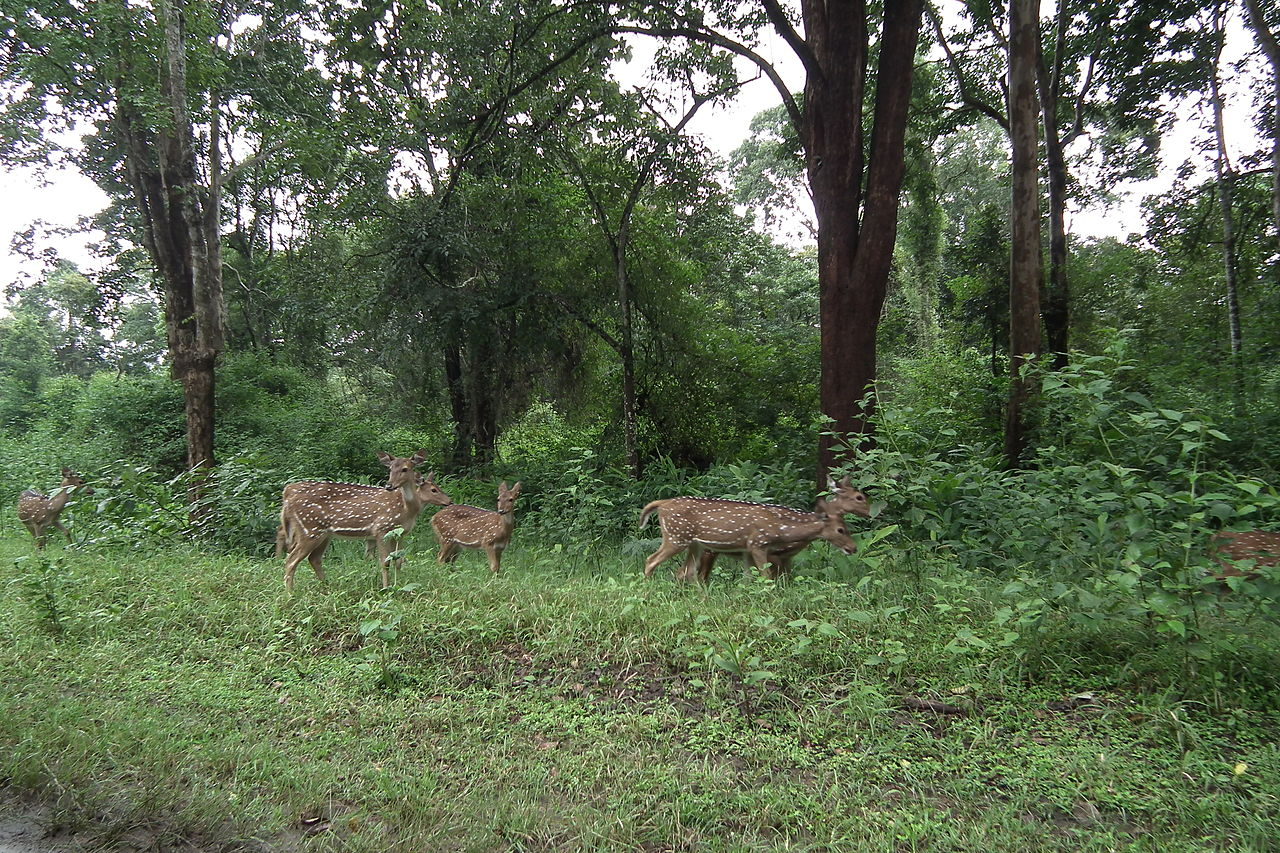 Place To Visit Near Kabini River In Kabini-Nagarhole National Park