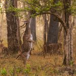 Nagarhole National Park - An Amazing Place to Visit Near Mysore and Kodagu in Karnataka