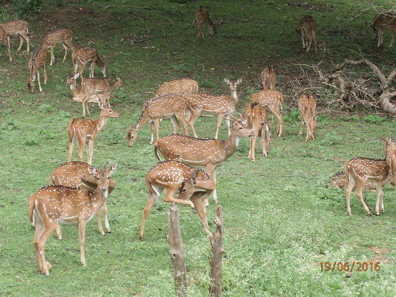 Nagarhole National Park - Beautiful Place To See Near Iruppu Falls