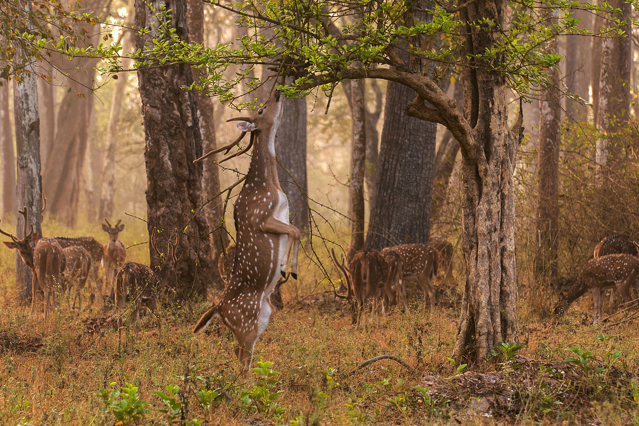 Nagarhole National Park - An Amazing Place to Visit Near Mysore and Kodagu in Karnataka