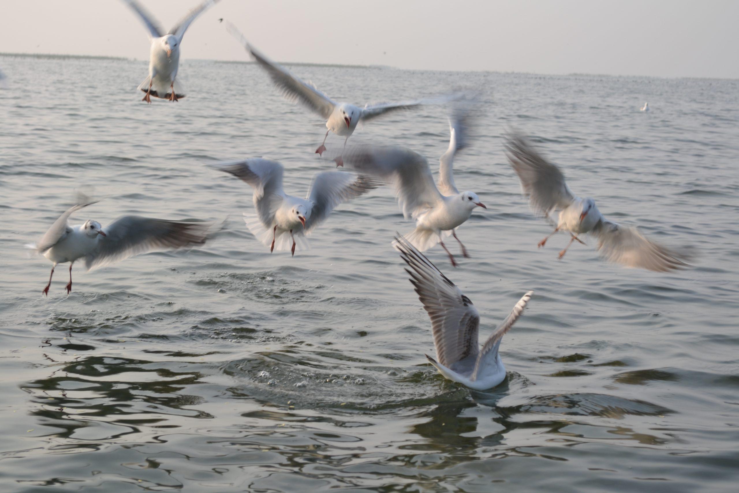 Nal Sarovar Bird Sanctuary Weekend Getaway Near Ahmedabad